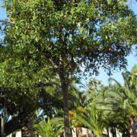 Bomen in de Jardines del Turia
