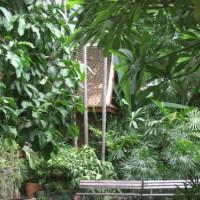 Plantentuin van het Jim Thompson huis