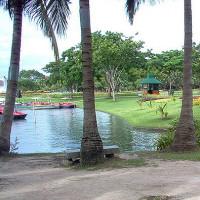 Bomen en vijver in het Koninklijk Rama IX park