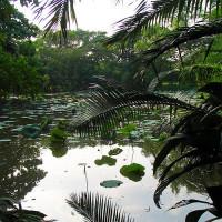 Vijver in het Koninklijk Rama IX park