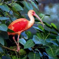 Vogel in de Las Vegas Zoo