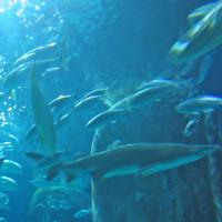 Haaien in het London Aquarium