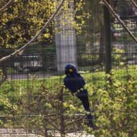 Vogel in de London Zoo
