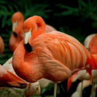 Flamingo's in de Los Angeles Zoo
