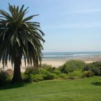 Palmboom in Malibu