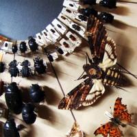 Insecten in Madrid