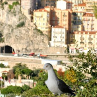 Meeuw in Monte Carlo