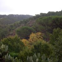 Cactussen in de Montes de Málaga