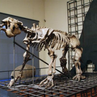 Skelet in het Museo de Ciencias Naturales