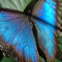 Vlinder in het Natuurhistorisch Museum