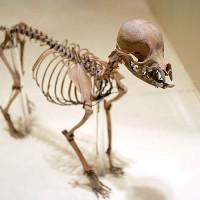Skelet in het Natuurhistorisch Museum