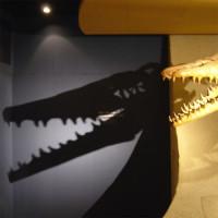 Binnen in het Natuurhistorisch Museum