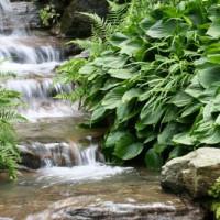 New Yor Botancial Garden