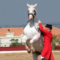 Ruiter en paard in Wenen