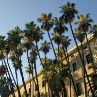 Palmbomen in Malaga