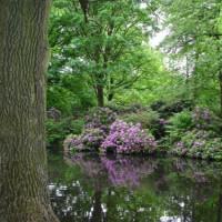 Vijver in het Park Tiergarten