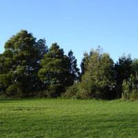 Bomen in het Parque da Cidade