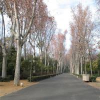 Pad in het Parque María Luisa