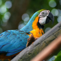 Papegaai op Parrot Jungle Island