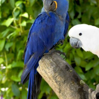 Vogels op Parrot Jungle Island