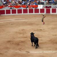 Stierenvechter in Valencia