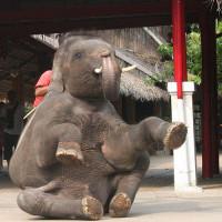 Olifantenshow in Bangkok