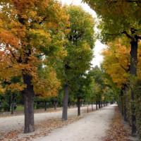 Herfst in de Schönbrunntuinen