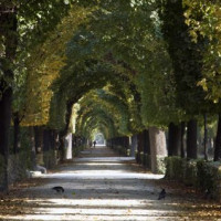 Laan door de Schönbrunntuinen