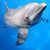Dolfijn in het Seaquarium