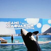Orka van het Seaquarium