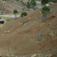 Heuvel in het Selwo Aventura