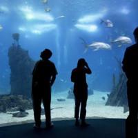 Aquarium in het Oceanário