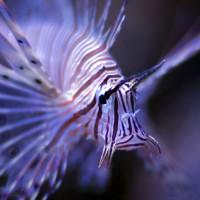 Schorpioenvis in Aquatopia