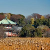 Bouwwerk in het Uenopark