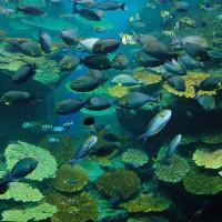 Beeld van een aquarium