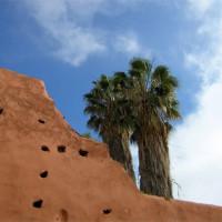 Palmboom aan de Oude stadsmuren