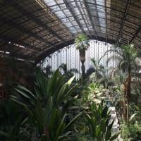 Tropische planten in Madrid