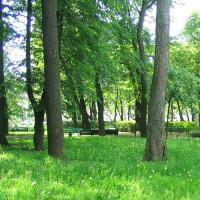 Bomen in de Zomertuin