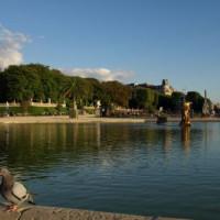 Duif in de Jardin du Luxembourg