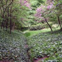 Planten in het Parque de El Capricho