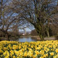 Bloemen in Victoria Park