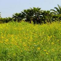 Bloemenveld in Yarqon Park