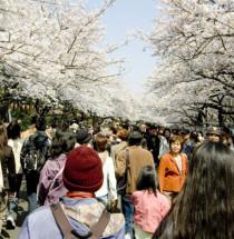 Ueno Kersenbloesemfestival