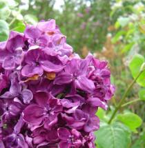Washington Flower and Garden Show