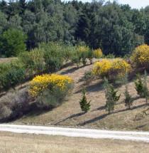 Arboretum Kirchberg