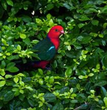 Parc Floral Phoenix