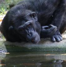Parc Zoològic de Barcelona