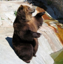 Zoo van Moskou