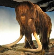 Zoologisch museum